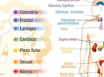 Os chacras no corpo vital:    O chacra coronário e